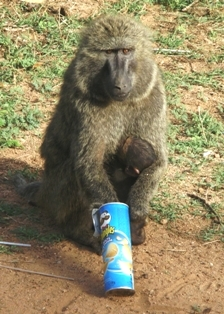 Baboon and baby with Pringles
